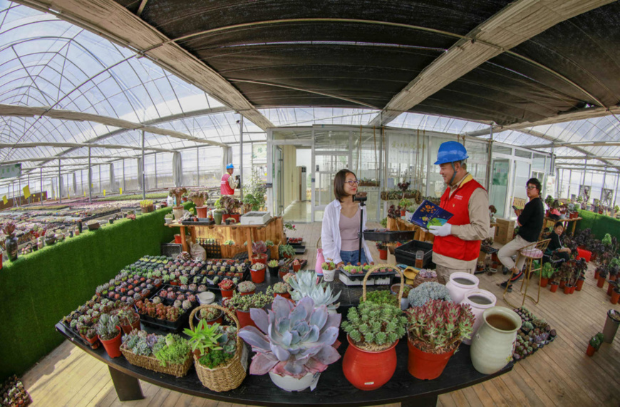 On May 21, 2019, Han Xiaowen, a popular livestreamer, sells succulent plants via livestreaming at an agricultural demonstration park in Gengche township, Suqian, east China's Jiangsu province. (Photo by Zhang Lianhua/People's Daily Online)