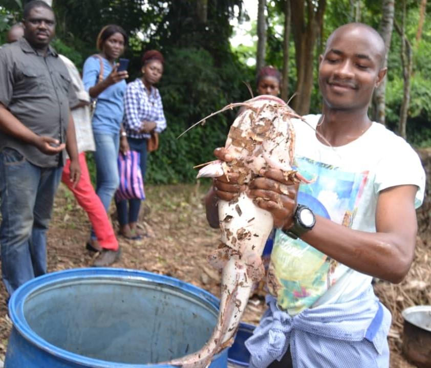 Cameroun/Pisciculture : Endinding livre le poisson de ses étangs