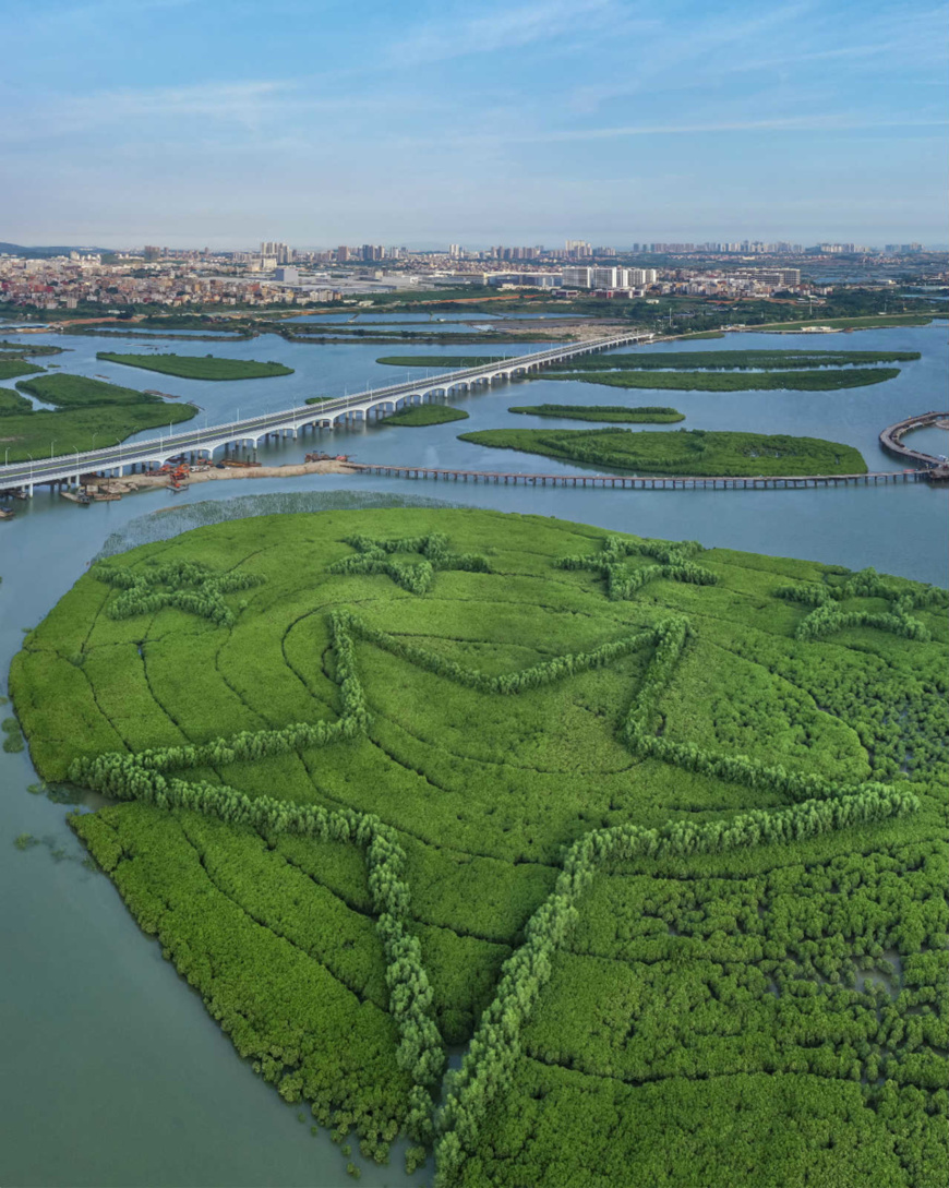 Photo taken on July 25, 2019 shows a wetland park in Xiamen, East China's Fujian Province. The wetland park is the largest-ever artificial mangrove project in Xiamen. Photo by Su Huaqi/People's Daily Online