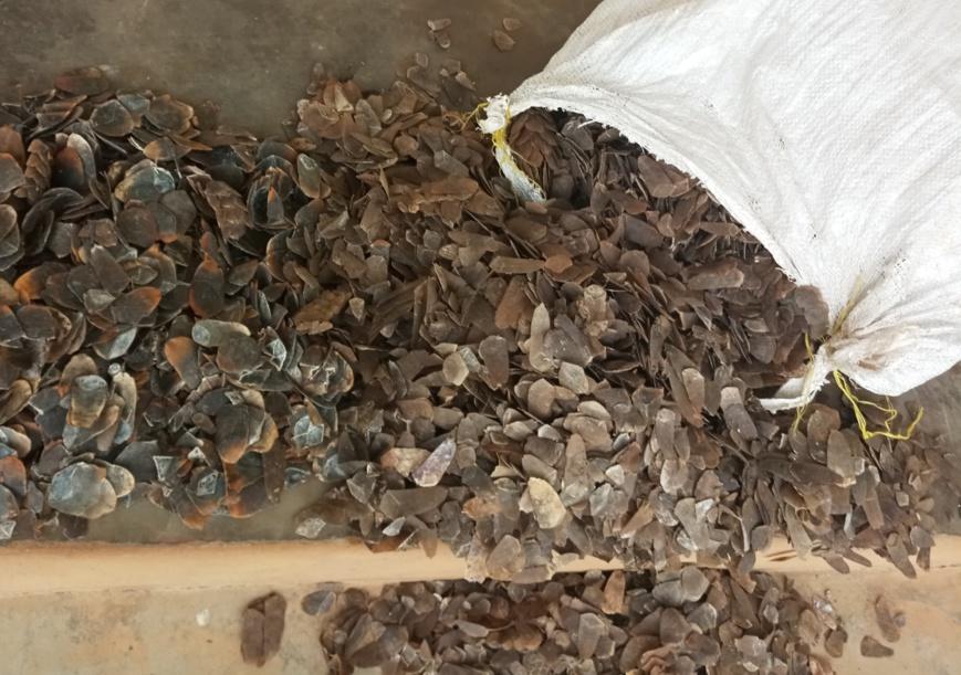 Cameroun : Des trafiquants de pangolin au Tribunal