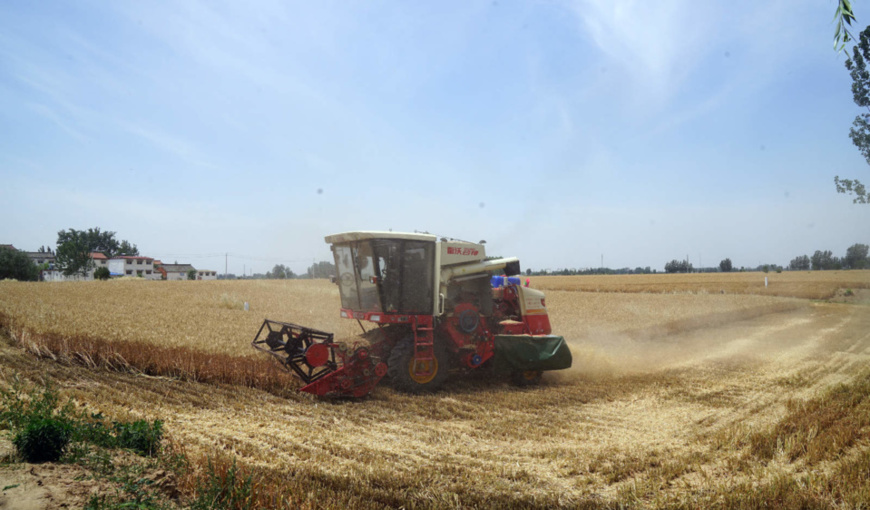 A harvesting machine works in a field in Xihua county, Zhoukou, central China's Henan province, May 28. Photo by Jin Yuequan, People's Daily Online