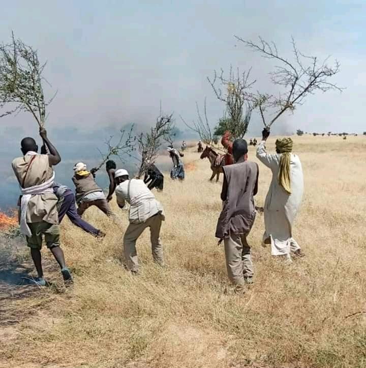Tchad : des animaux calcinés dans un feu de brousse à Ouadi-Rimé