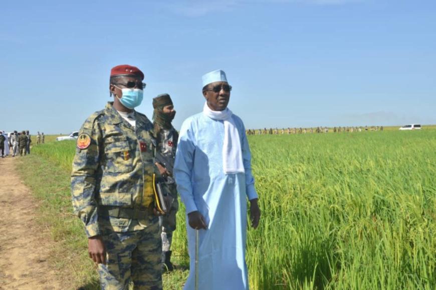 Tchad : près de Bongor, le génie militaire se montre efficace en exploitation agricole de riz