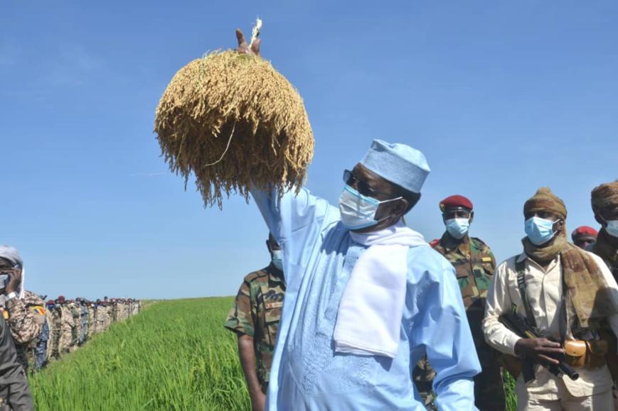 زراعة:مشير تشاد يزور الحقل الزراعي تشاراي