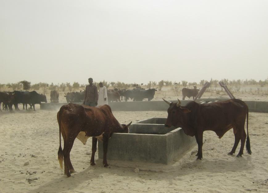 Sahel et bassin du lac Tchad : la BAD soutient la sécurité alimentaire pour prévenir l'aggravation sécuritaire