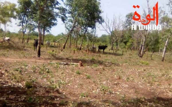 Tchad : un faux douanier arrêté et incarcéré à Léré, il escroquait des villageois