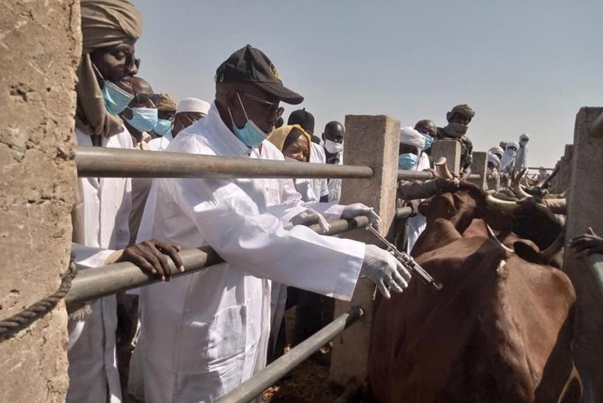 Tchad : La compagne de vaccination contre la peste et la péripneumonie a été lancée ce jour à Filey