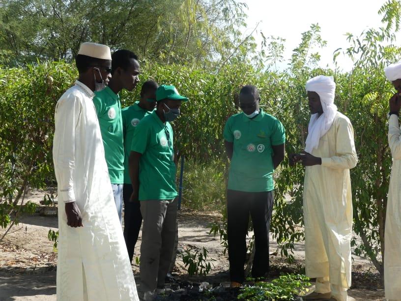Tchad : au Barh El Gazel, l'ONG Sahkal au devant de la lutte contre la désertification