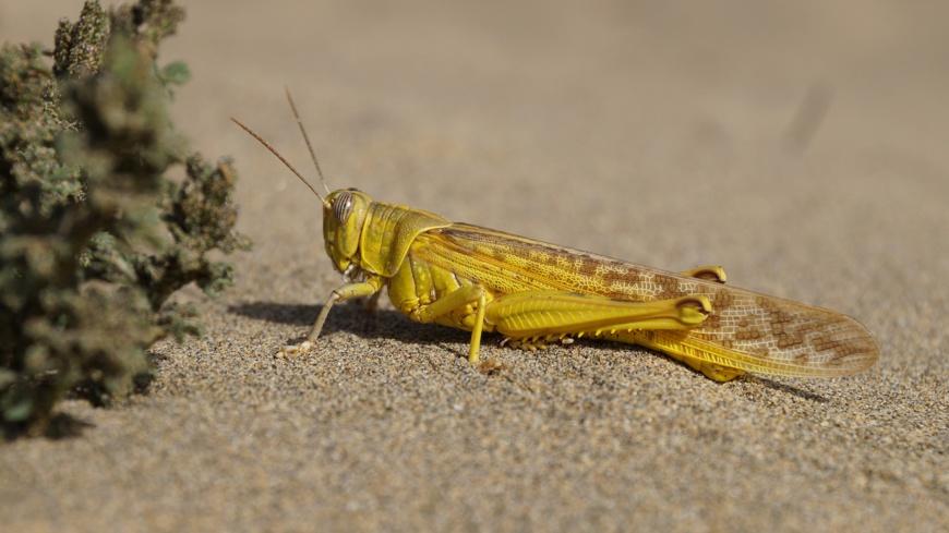Un criquet sur le sable. © Pixabay