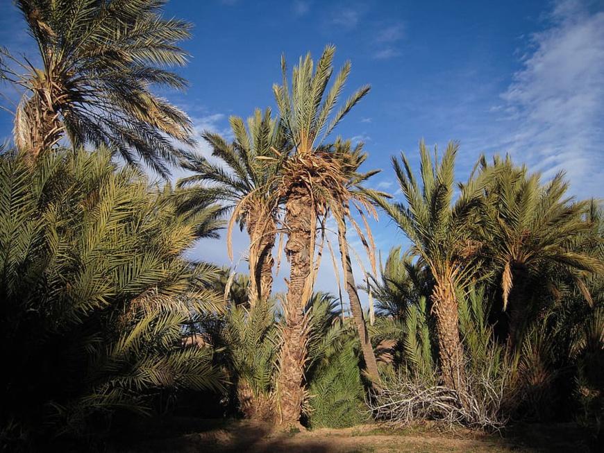 La reforestation est capitale pour lutter contre le réchauffement climatique. ©DR