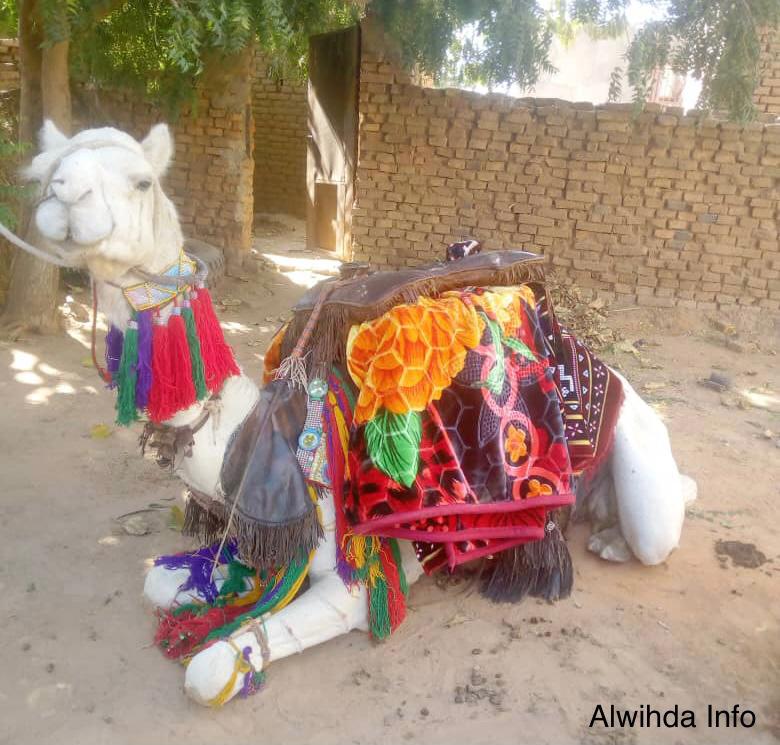 Tchad : un ancien ministre offre des chameaux au président