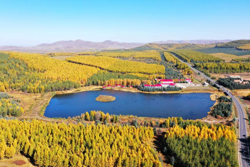 Photo taken on Oct. 1, 2020 shows a beautiful view in Saihanba National Forest Park in Chengde, north China's Hebei province. (Photo by Fan Jiashan/People's Daily Online)