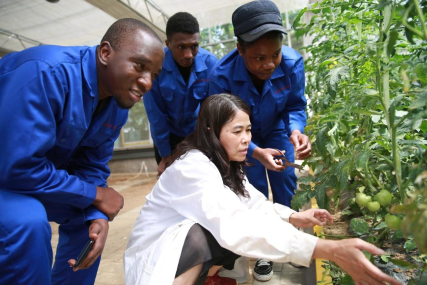 Guinean students in China learn agricultural knowledge and technologies from a teacher at a training base in Weinan, northwest China's Shaanxi province, under the framework of the Belt and Road Initiative, May 28, 2020. (Photo by Niu Gang/People's Daily Online)