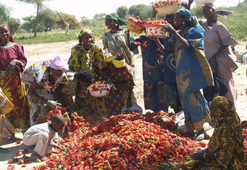 Bassin du Lac Tchad : La BAD s'engage pour l'autonomisation des femmes au Sahel