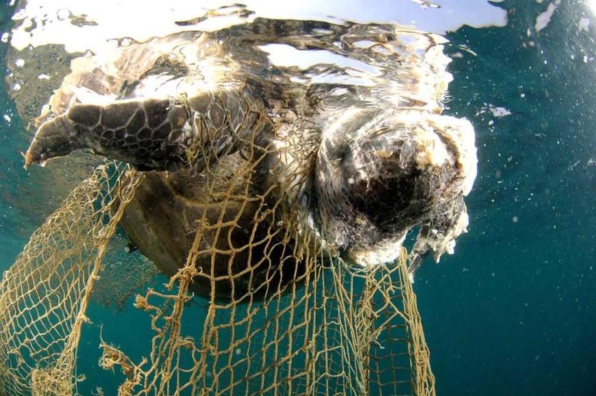Afrique : trafic illicite des tortues marines, l'espèce toujours en danger. © DR