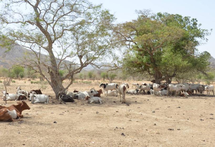 Élections au Tchad : les nomades sensibilisés sur l'usage du bulletin de vote