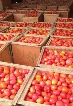 Tchad : La consommation de la tomate en temps de chaleur