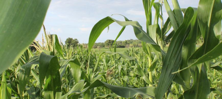 Les pays africains s'engagent à doubler la productivité agricole alors que des banques de développement et des institutions annoncent des financements de 17 milliards d'USD pour accroître la sécurité alimentaire