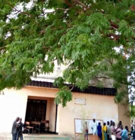 """Tchad : Néré, l'arbre """"utile"""" pour la santé"""