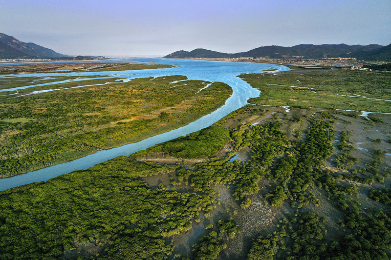 Photo taken on April 22, 2021, shows mangroves bathed under the sunset in the estuary of Zhangjiang River, Zhangzhou, southeast China's Fujian province. (Photo by Zhao Min/People's Daily Online)