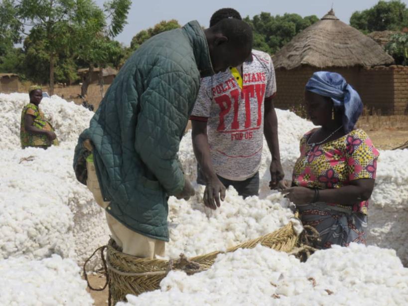 Tchad : le secteur du coton enregistre des progrès tangibles