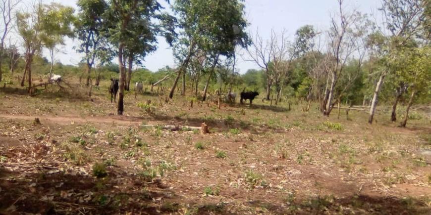 Tchad : un accord de gestion signé pour le futur parc national de Zah Soo
