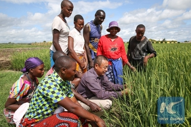 A demonstration farm run by Chinese agricultural experts to Tanzania. [Photo: Xinhua]
