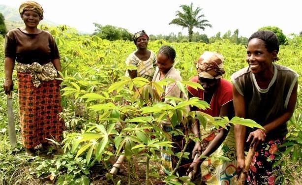 Des femmes dans un champ en Centrafrique. Crédit photo : eyesango.mondoblog.org