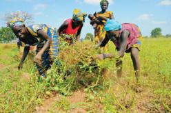 Le Sénégal s'interroge sur le partenariat entre l'Afrique de l'Ouest et l'UE
