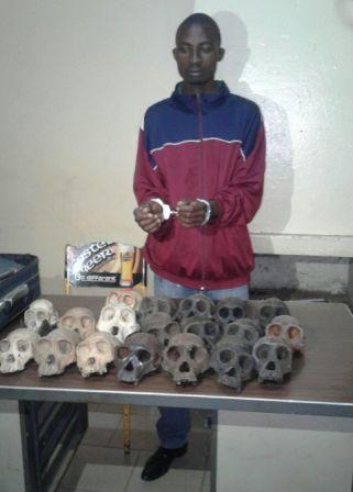 Le trafiquant aux arrêts dans un commissariat de police.