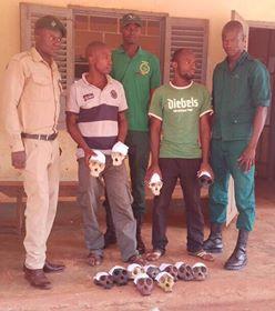 Des trafiquants fauniques entre les mains des agents du ministère en charge de la Faune.