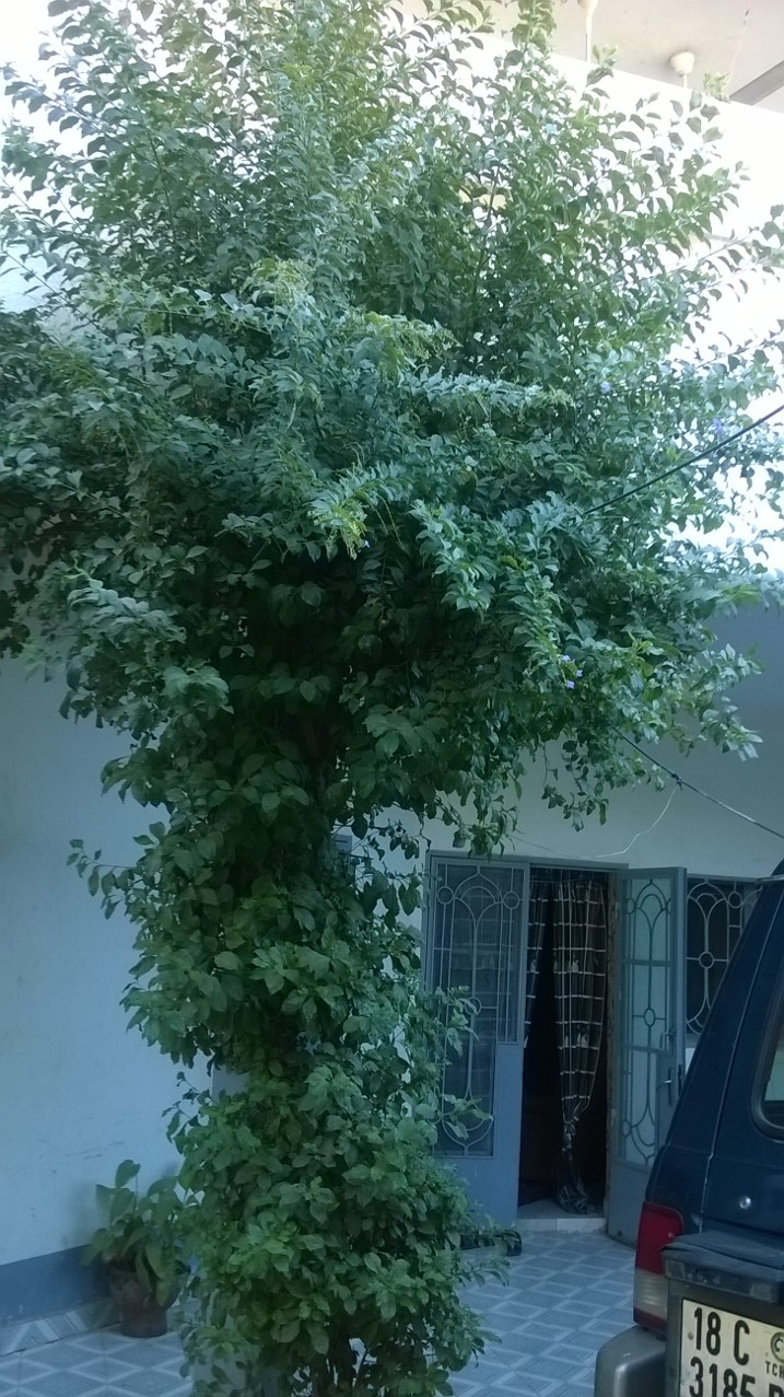 tchad loue une villa de deux tages quip e n 39 djamena. Black Bedroom Furniture Sets. Home Design Ideas