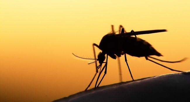 L'Alliance des dirigeants africains contre le paludisme (ALMA) va décerner ses prix d'excellence en matière de lutte contre le paludisme