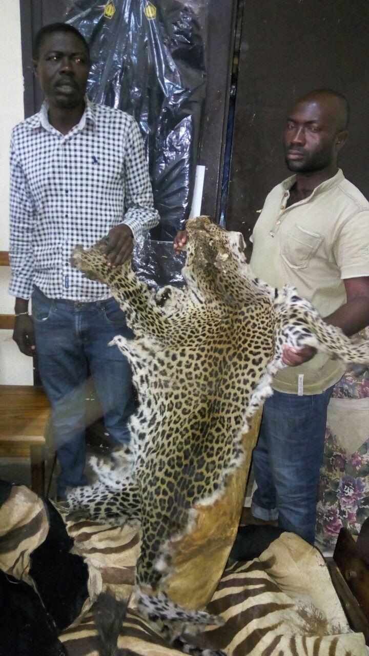 Yaoundé : des peaux de zèbre saisies