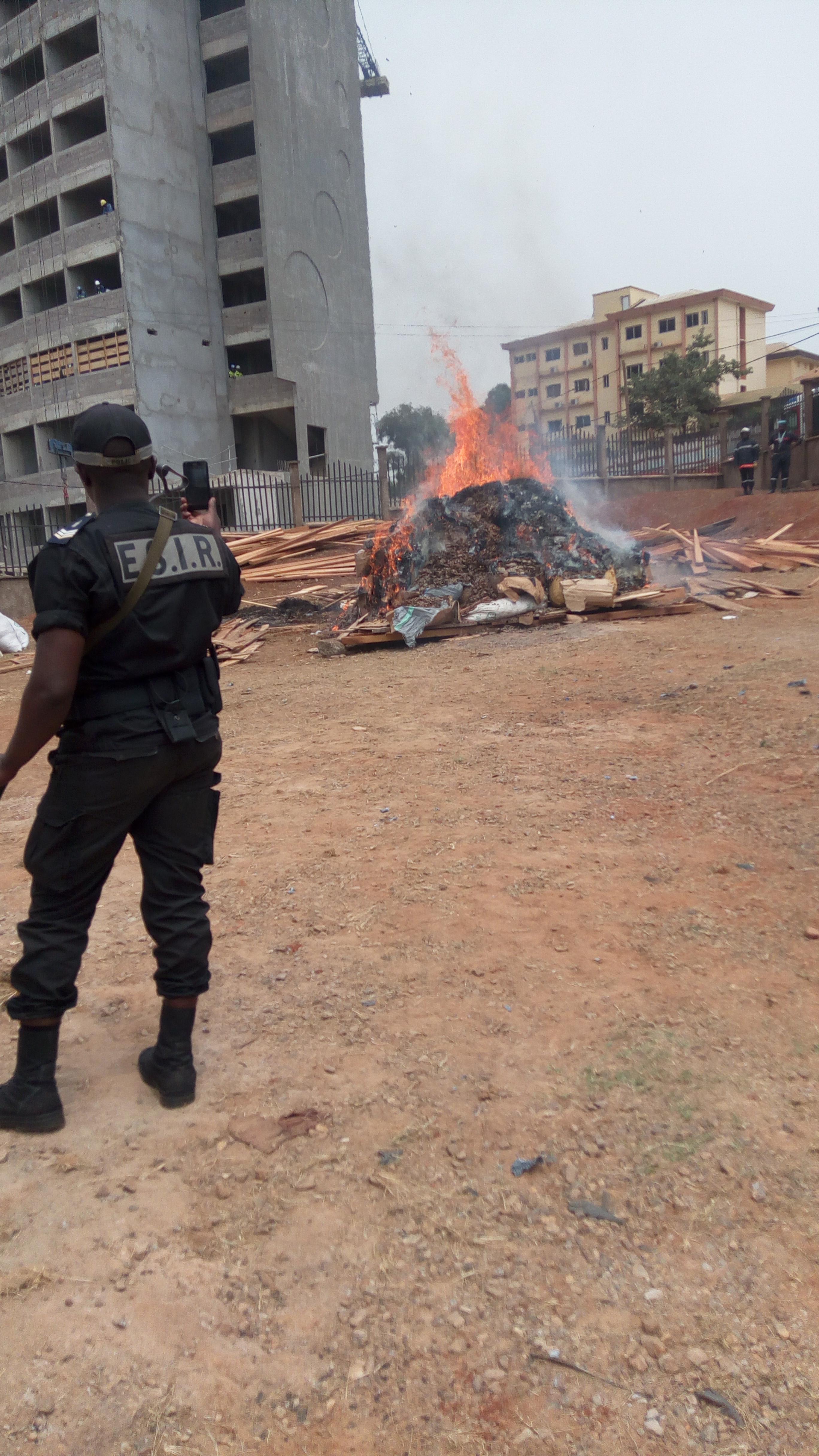 Cameroun : trois tonnes d'écailles de pangolins brûlées