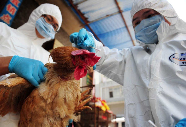 H7N9 epidemic is in decline: health authority