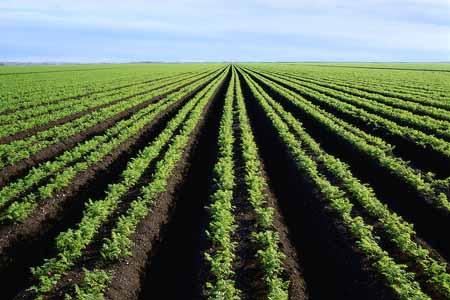Agriculture en Afrique. Crédits : Sources