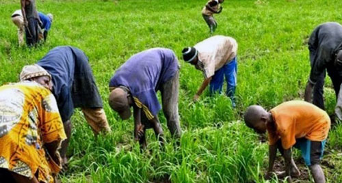 L'agriculture en Afrique. Crédits : Sources