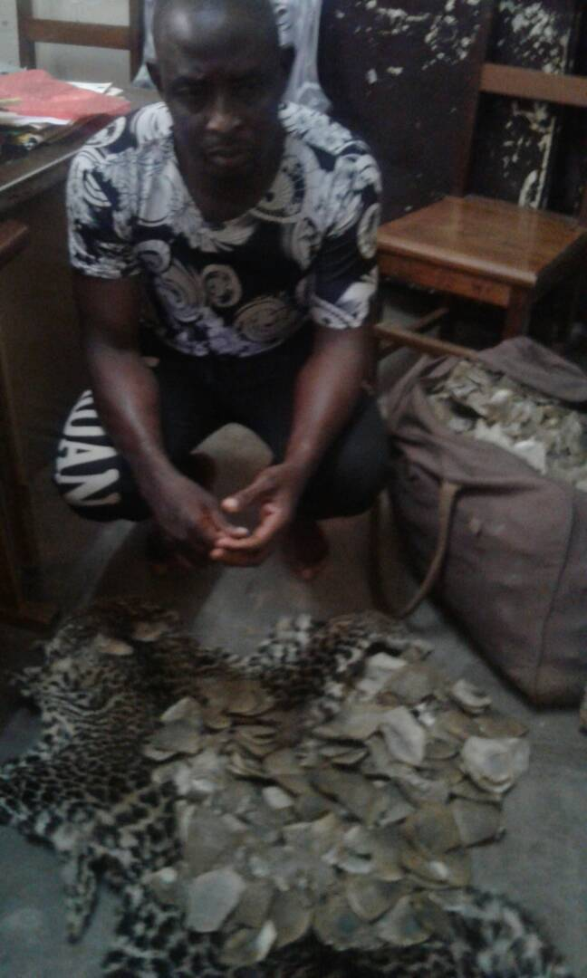 Cameroun : Un trafiquant faunique arrêté à Yaoundé