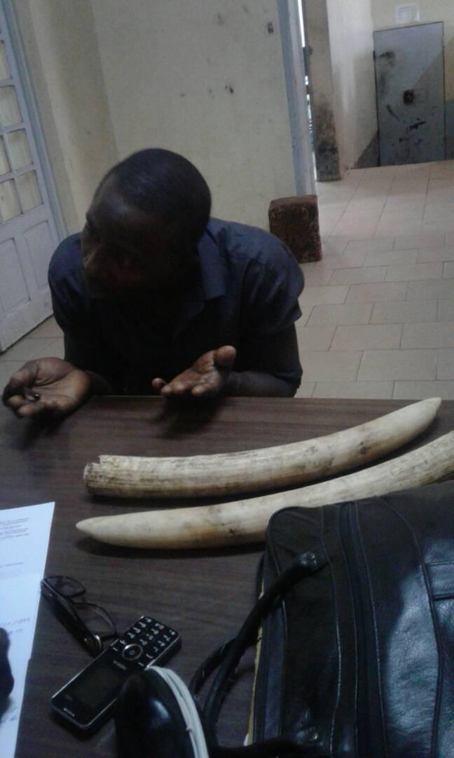 Un trafiquant d'ivoire au commissariat du 10ème arrondissement de la ville de Yaoundé.