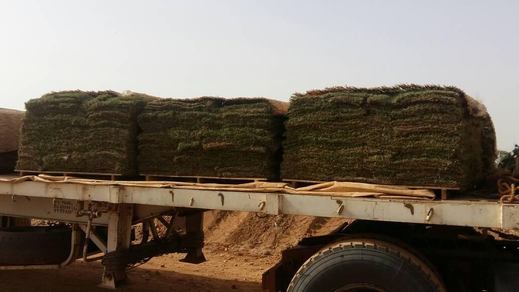 CAN2019: La pose du gazon sera lancée cette semaine à Garoua