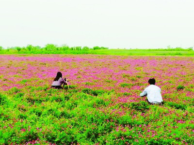 Blooming flowers on a piece of land covered by the crop rotation and fallow trials become a tourist attraction in east China's Jiangsu province. (Photo from Nanjing Daily)