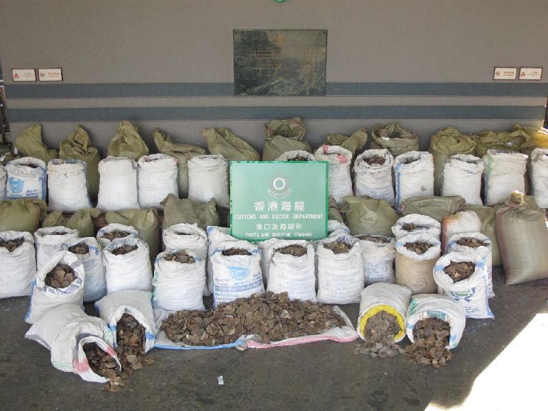 Espèces protégées en voie d'extinction : le pangolin chassé pour sa chair et ses écailles