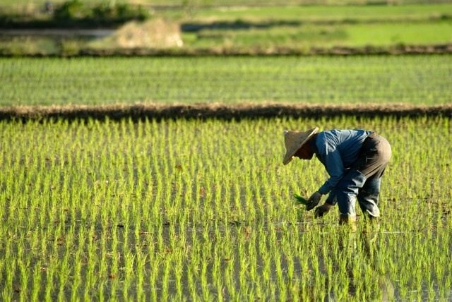 US risks losing agricultural section of Chinese market as result of trade friction