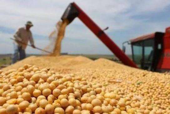 China to diversify supply system of soybean import