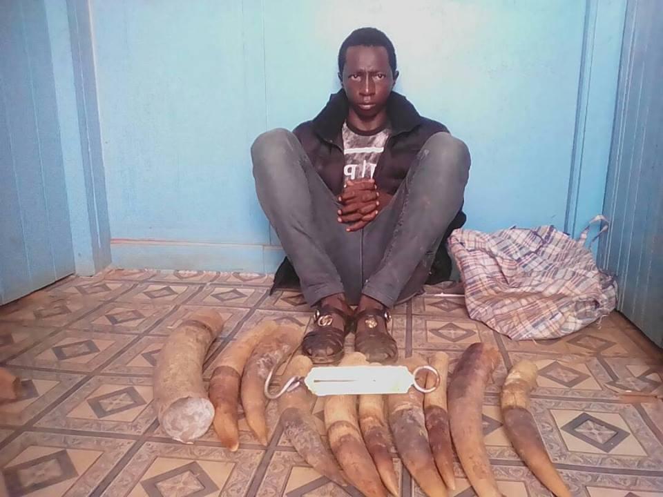 Des enquêtes antérieures montrent qu'Abdou Mahamad a passé des commandes de défenses d'ivoire à des braconniers.