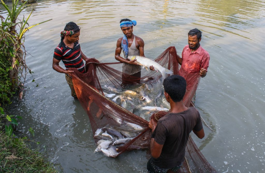 Un programme de Feed the Future encourage l'essor de l'aquaculture au Bangladesh. (USAID)
