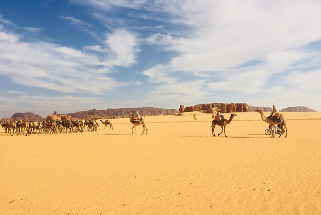 Des dromadaires dans le désert tchadien. © AFD