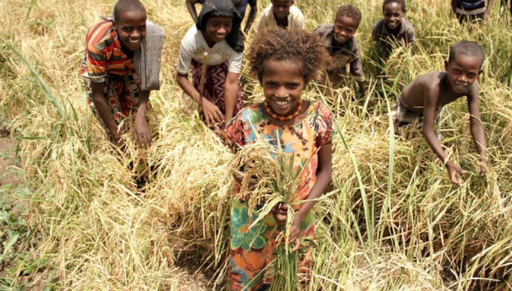 Des enfants dans un champ en Afrique. © Flickr/FAO of the UN