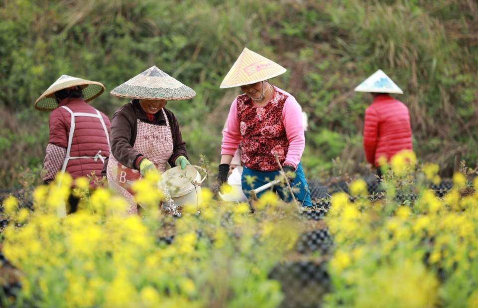 Professional farmers are busy with the farm work in the season for spring ploughing in Danzhai county, China's southeast Guizhou province. (Photo: People's Daily Online)